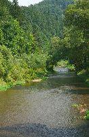 Rzeka Muszynka